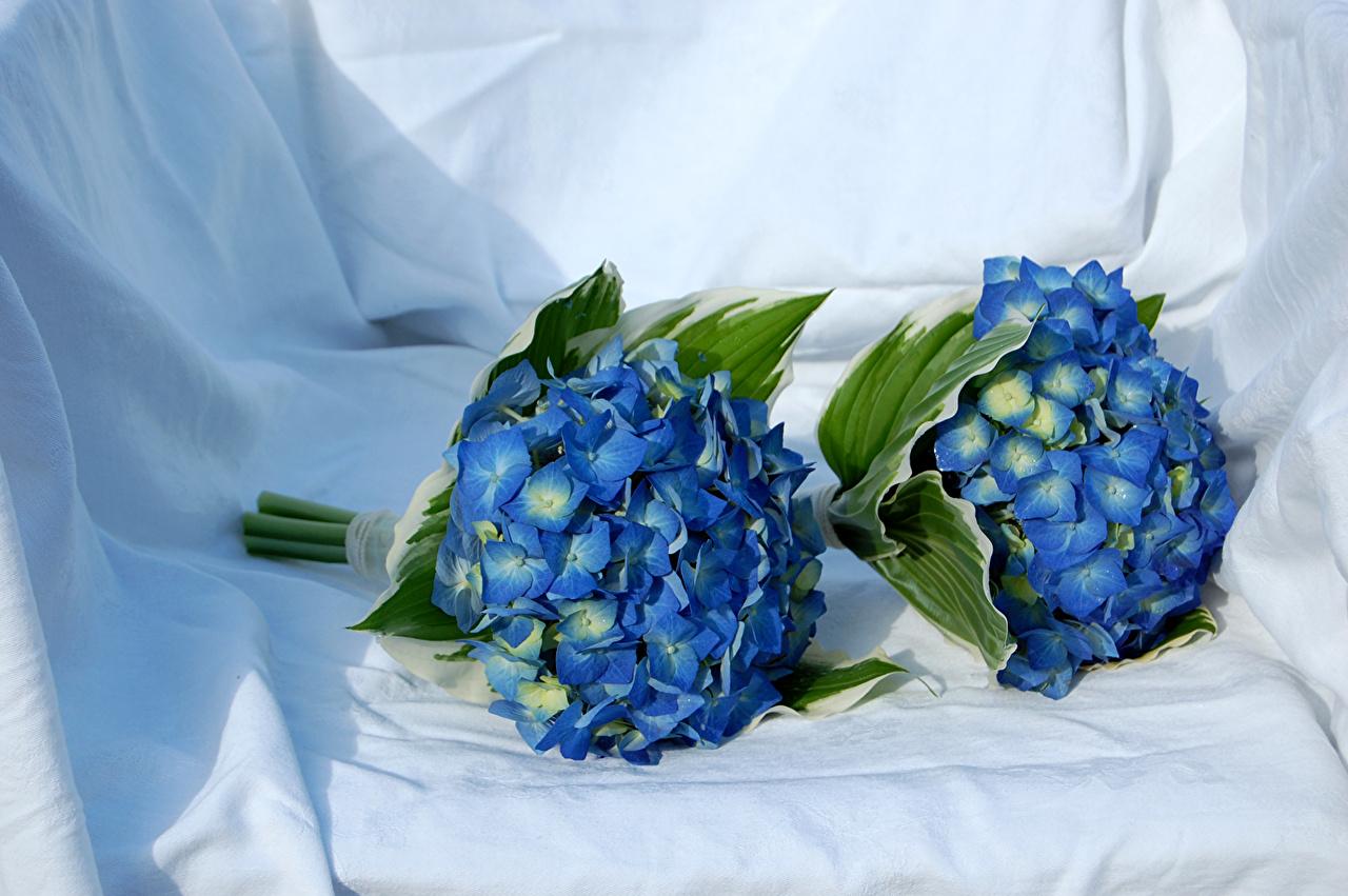 Фотографии Букеты две голубая Цветы Гортензия букет 2 два Двое вдвоем Голубой голубые голубых цветок