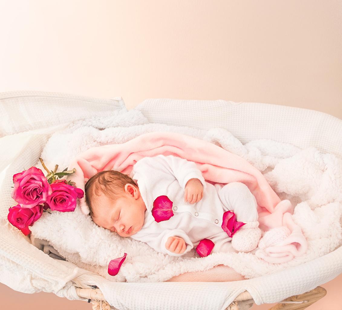 Картинки грудной ребёнок Дети Розы спят Лепестки младенца младенец Младенцы ребёнок сон Спит роза спящий лепестков