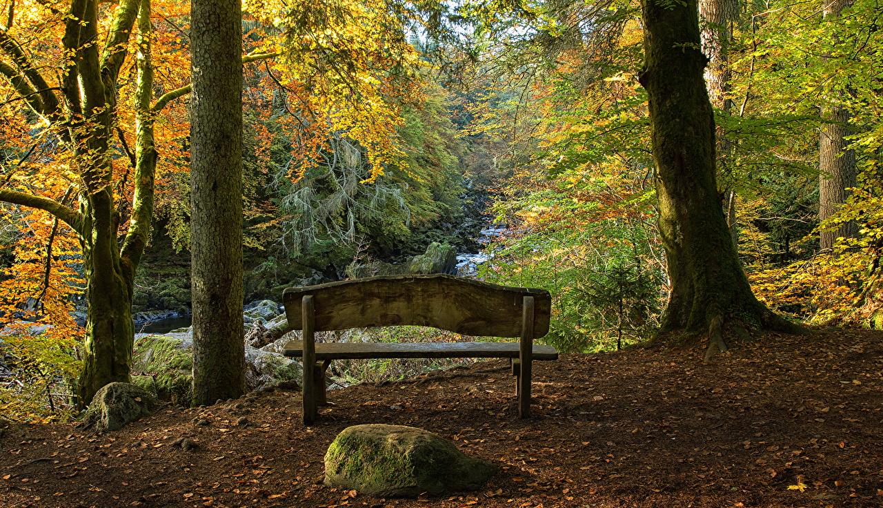 Фотография Шотландия Hermitage Осень Природа Парки Ствол дерева Скамья Камень дерево осенние парк Камни Скамейка дерева Деревья деревьев
