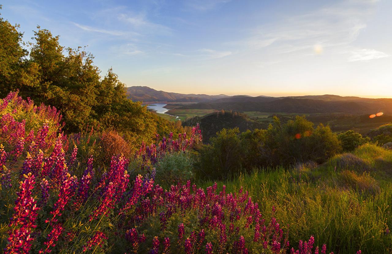 Обои для рабочего стола Йосемити штаты Природа Парки Львиный зев Трава Кусты США америка парк Антирринум траве кустов