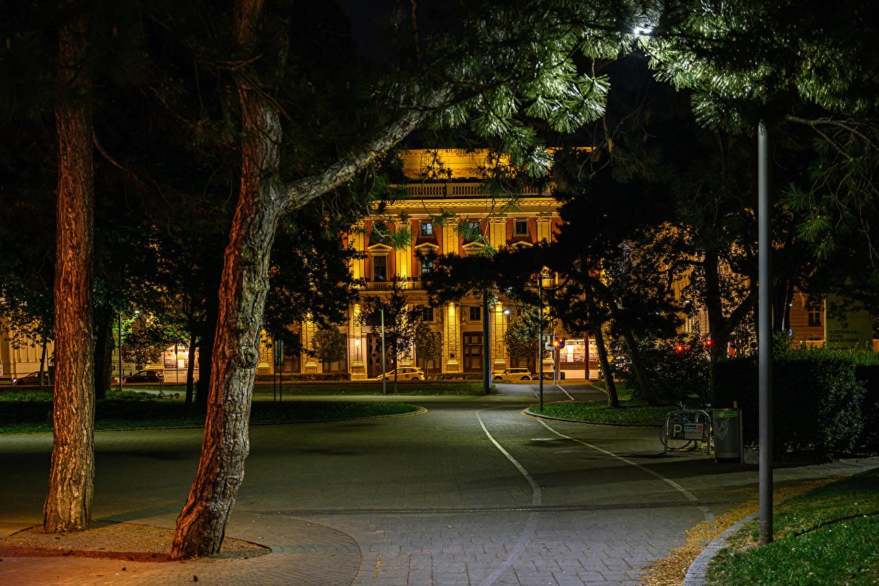 Фотография Вена Австрия ночью Здания дерево Города Ночь в ночи Ночные Дома город дерева Деревья деревьев