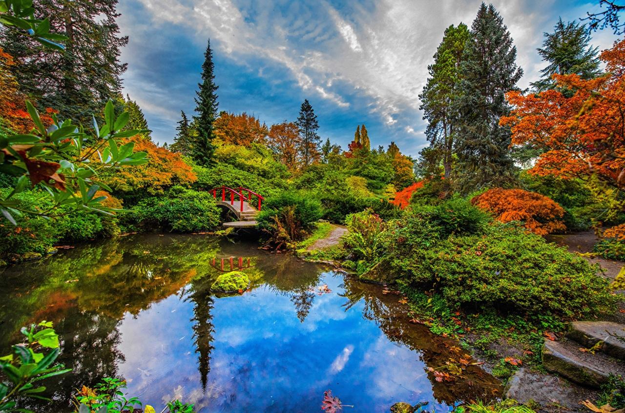 Фото Сиэтл америка Kubota Garden Мосты осенние Природа Сады Пруд Отражение деревьев США штаты мост Осень отражении отражается дерево дерева Деревья