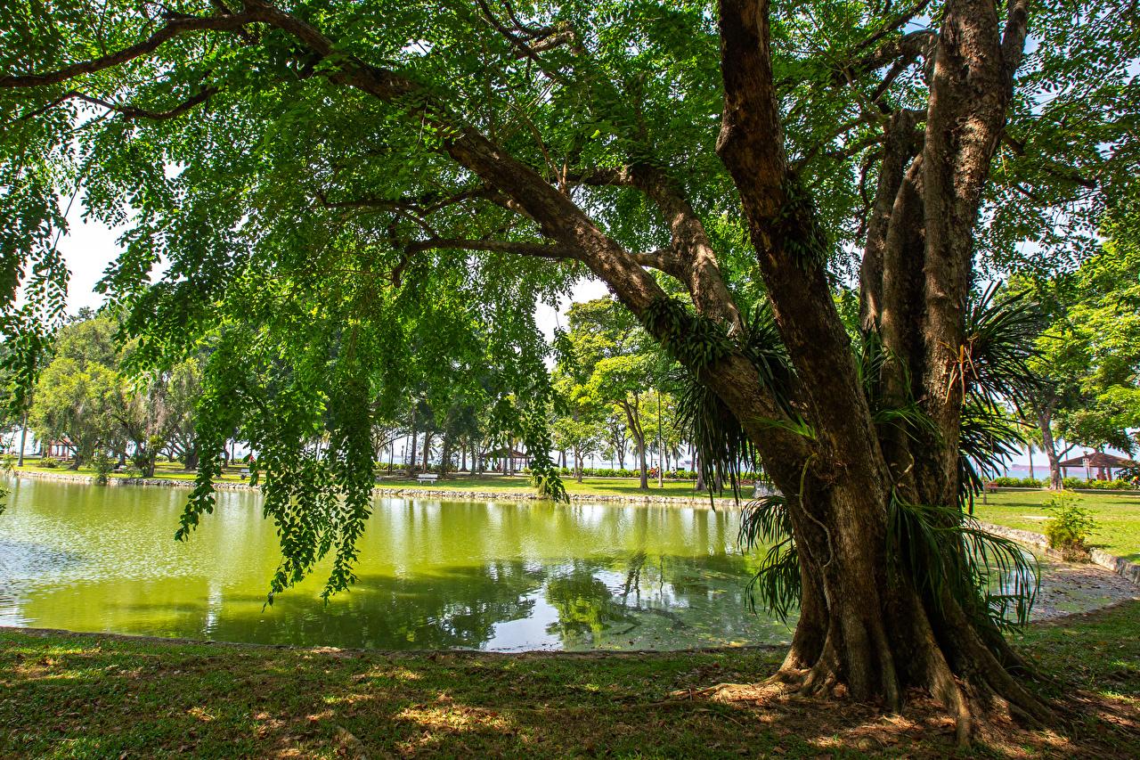 Фотография Сингапур East Coast Park Природа Пруд Парки Деревья парк дерево дерева деревьев