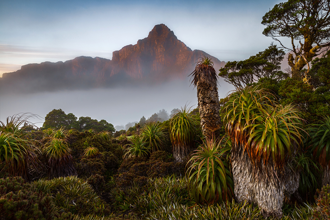 Фотографии Австралия тумане Горы Природа Кактусы Туман тумана