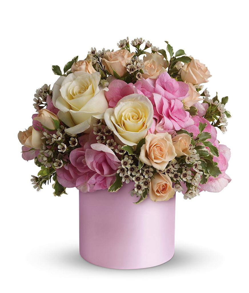 Фотография Букеты Розы Цветы Ваза Белый фон