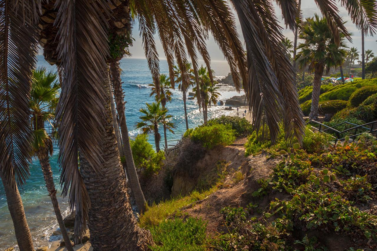 Фотографии калифорнии америка Laguna Beach Скала Природа пальм Ствол дерева берег Калифорния США штаты Утес скалы скале Пальмы пальма Побережье