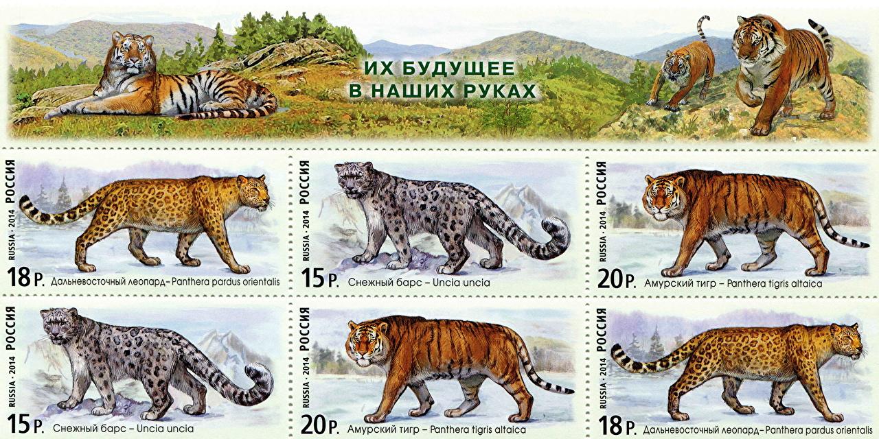 Фотография Тигры Барсы Леопарды Their future developments in our hands животное Рисованные тигр Ирбис леопард Животные