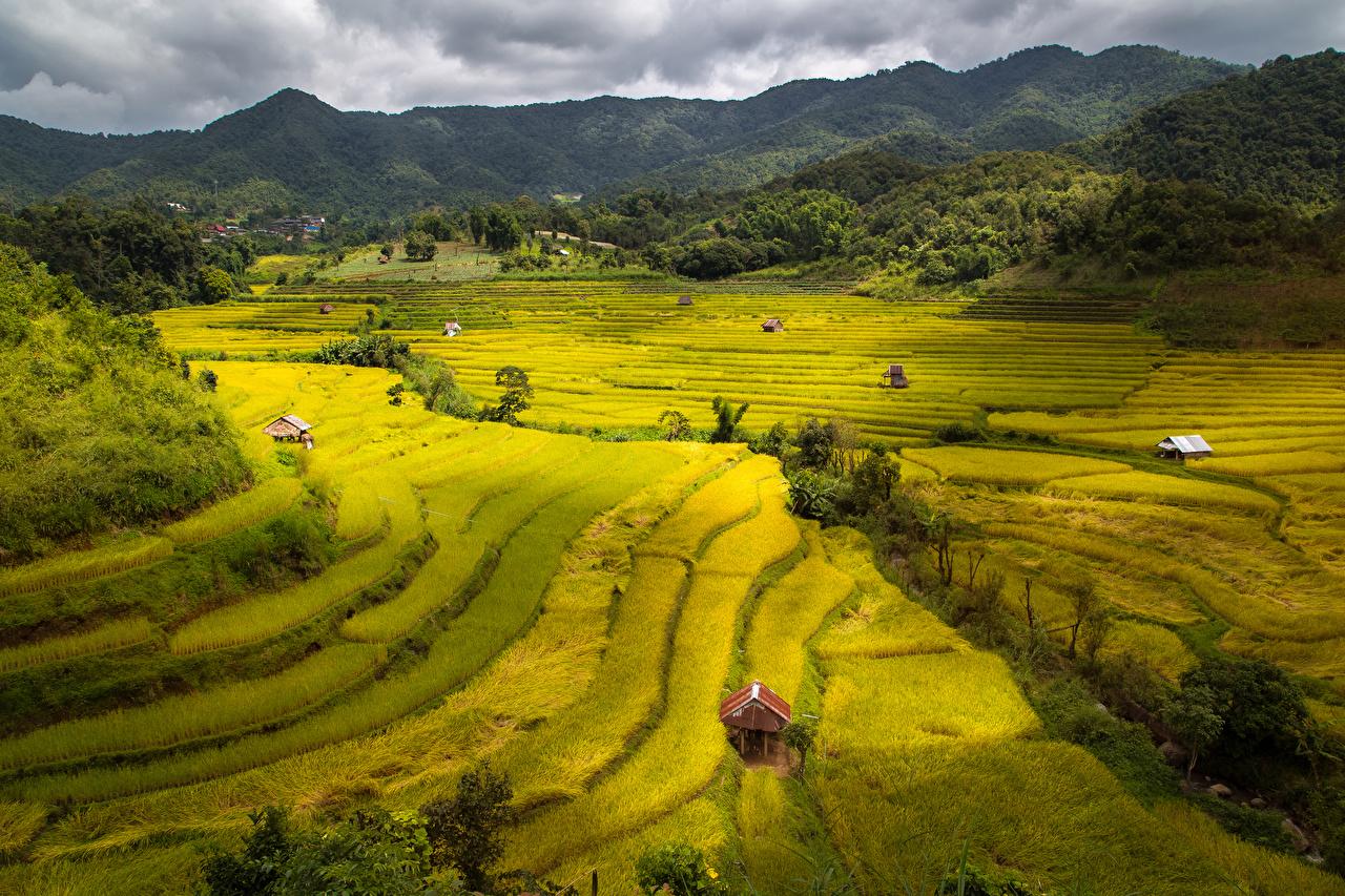 Картинка Вьетнам Природа Поля Холмы холм холмов