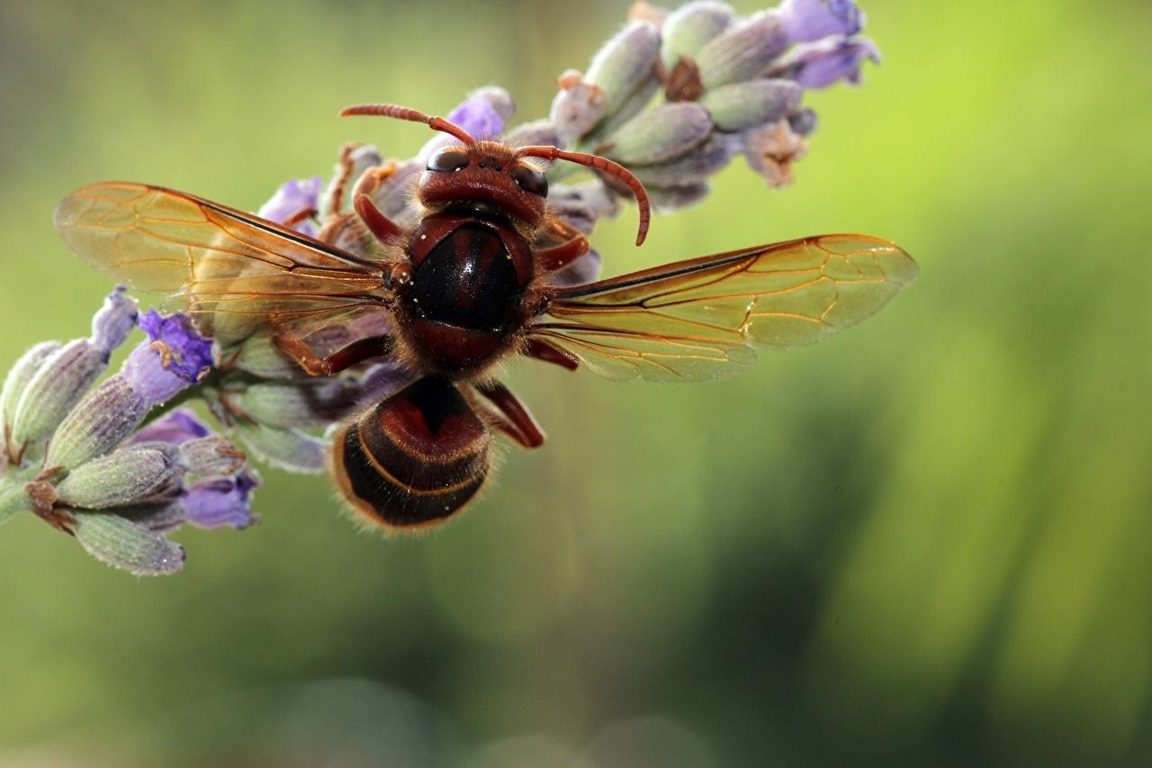 Фото Оса насекомое Размытый фон Макро Животные Крупным планом осы Насекомые боке Макросъёмка вблизи животное