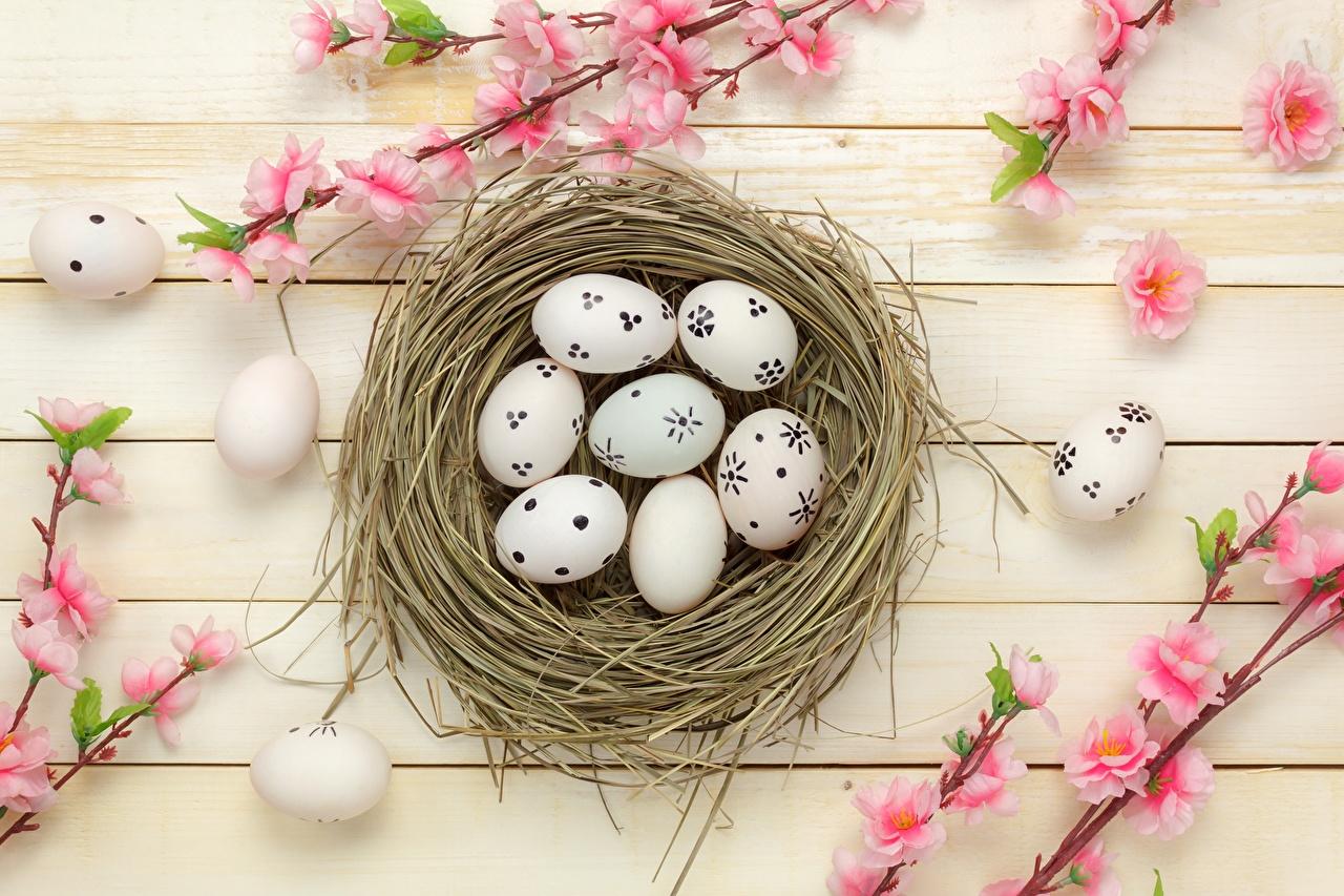 Фотография Пасха Яйца гнезде Доски яиц яйцо яйцами гнезда Гнездо