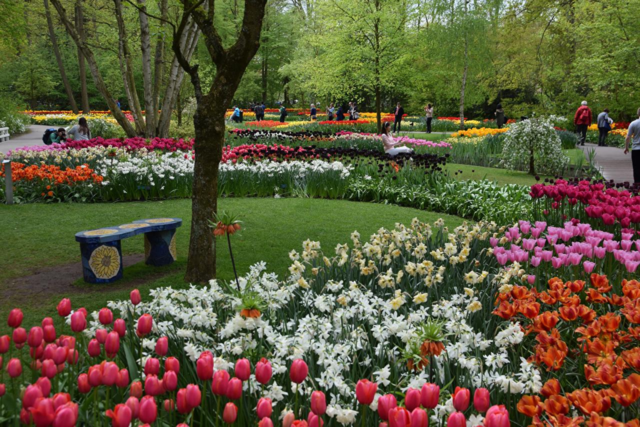 Фото Нидерланды Keukenhof Природа Тюльпаны Парки Скамейка тюльпан парк Скамья