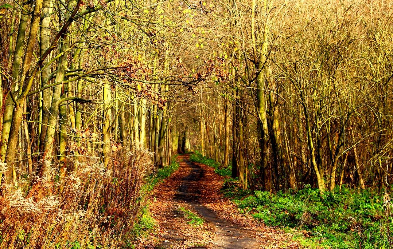 Обои Осень Природа Леса Дороги осенние