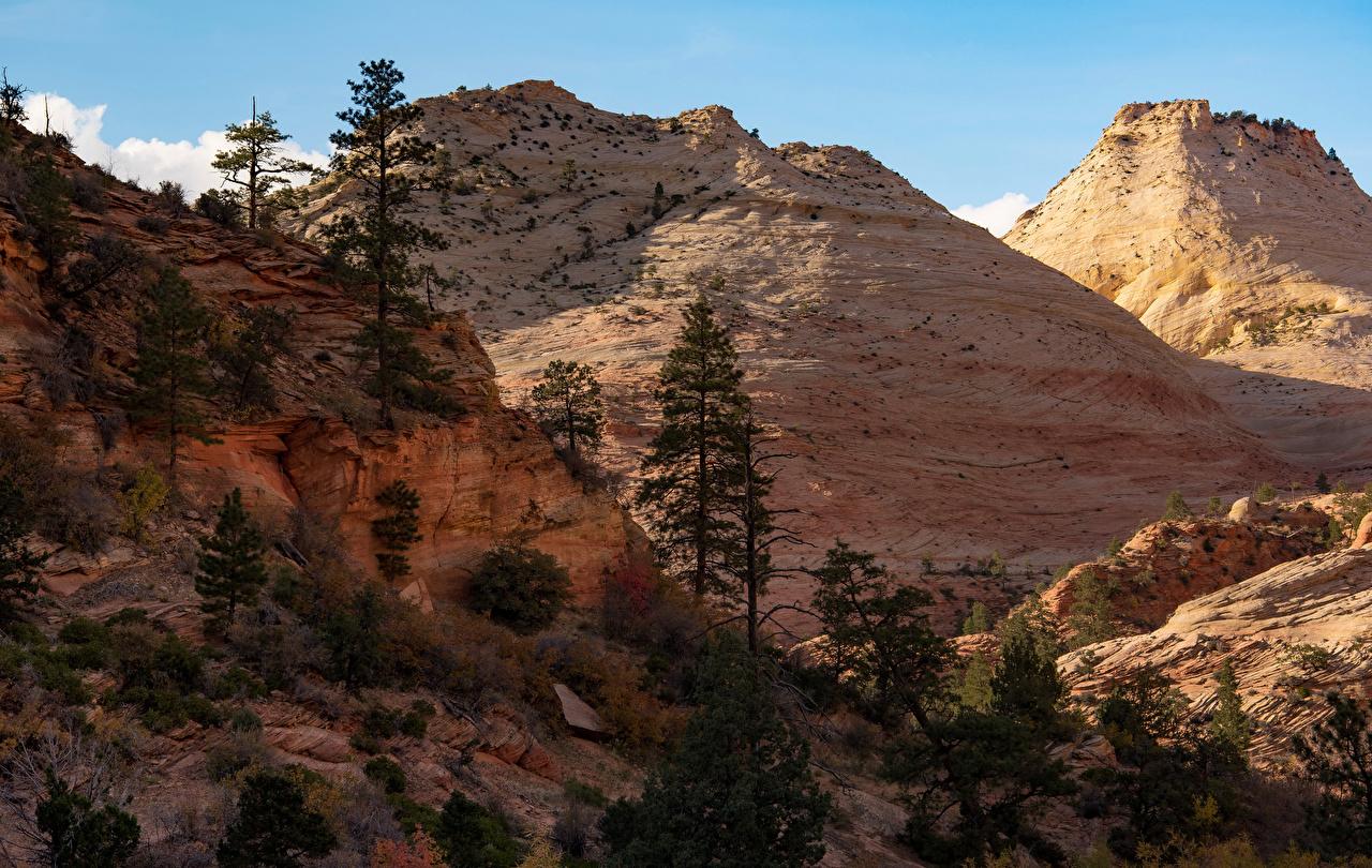 Картинки Зайон национальнай парк США Природа Парки дерева штаты парк дерево Деревья деревьев