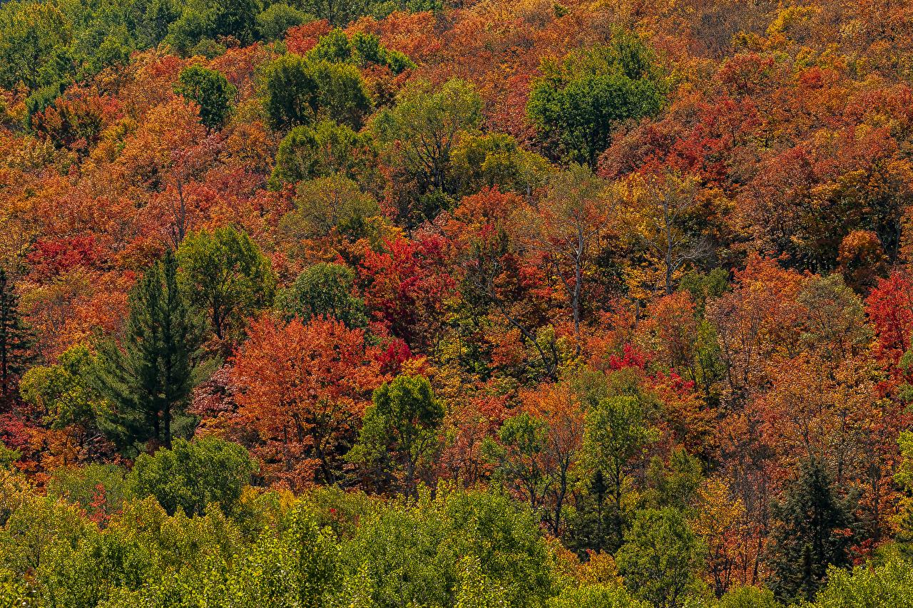Фотографии Канада Algonquin Park, Ontario Осень Природа Парки Деревья осенние парк дерево дерева деревьев