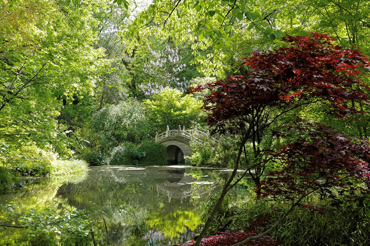 Картинка Германия Duisburg Мосты Природа Пруд парк Кусты дерева мост Парки кустов дерево Деревья деревьев