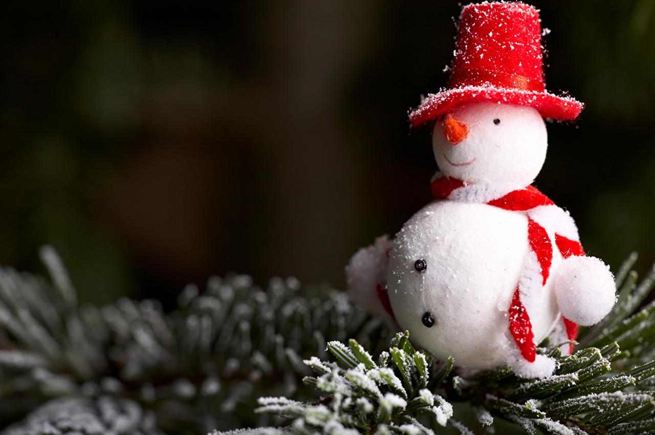 Картинки Рождество шарфе Шляпа снеге Снеговики Ветки Новый год Шарф шарфом шляпы шляпе Снег снега снегу снеговик снеговика ветвь ветка на ветке