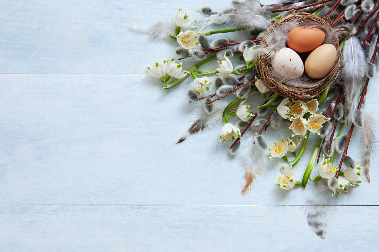 Картинки Пасха verba Яйца Гнездо Ветки яиц яйцо яйцами гнезде гнезда ветвь ветка на ветке