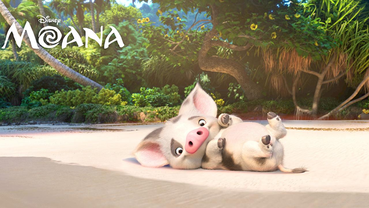 Картинка Disney Моана Домашняя свинья Pua Мультики 3D Графика Дисней 3д мультик Мультфильмы