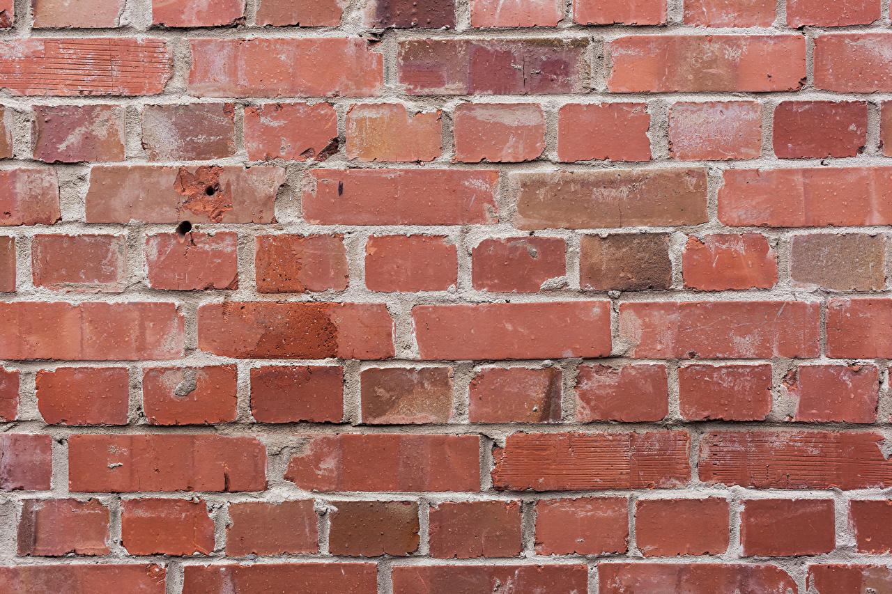 Фото Текстура Кирпичный стене из кирпича Стена стены стенка