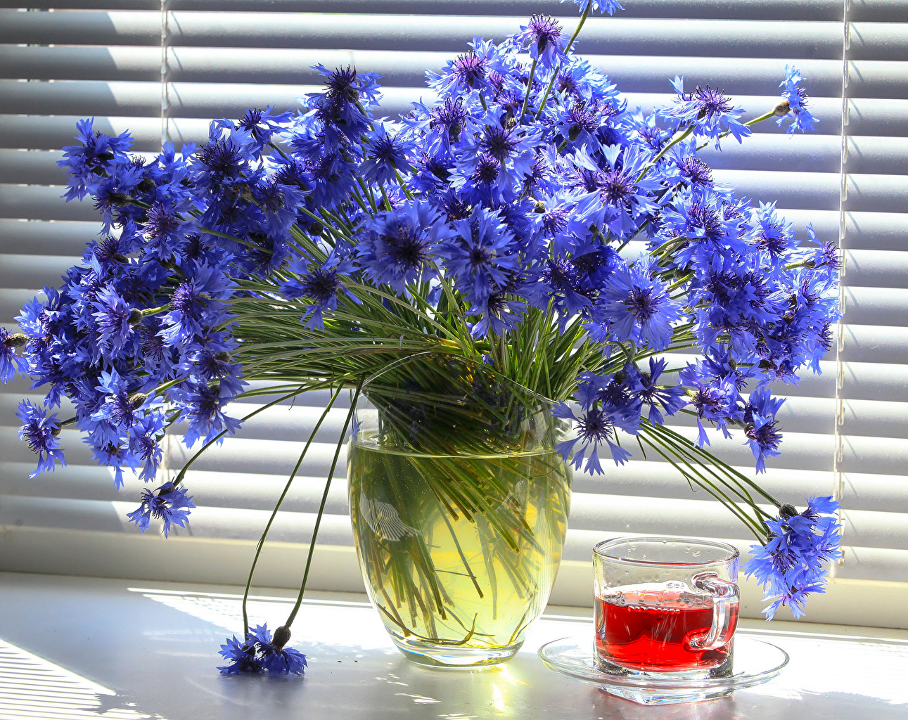 Картинки Чай Цветы Ваза Чашка Васильки Натюрморт цветок вазе вазы чашке