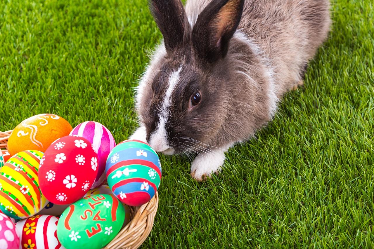 Фото Пасха кролик Яйца траве Животные Кролики яиц яйцо яйцами Трава животное