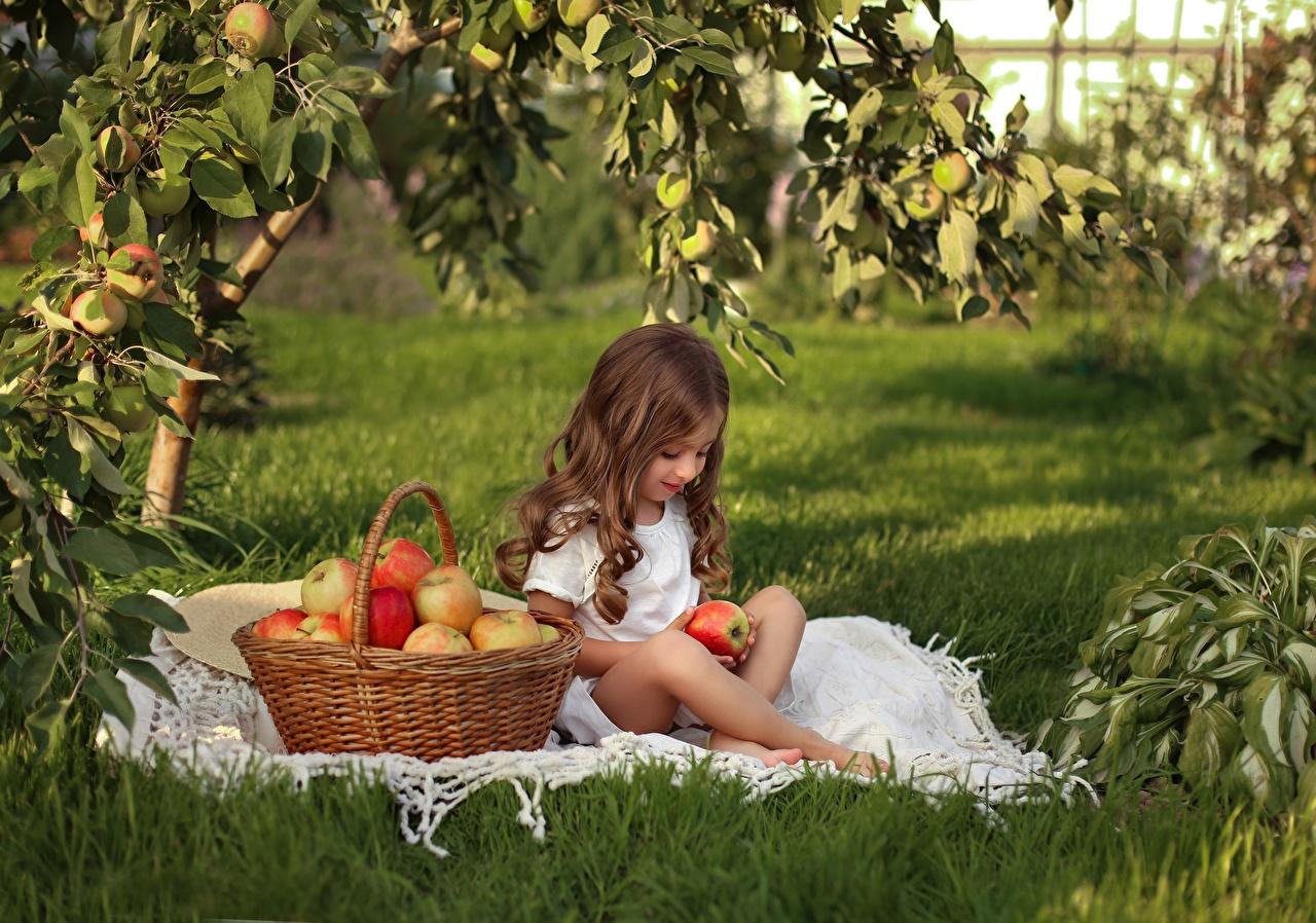 Фотография девочка Шатенка Дети Яблоки Корзина траве сидящие Девочки шатенки ребёнок корзины Корзинка сидя Трава Сидит