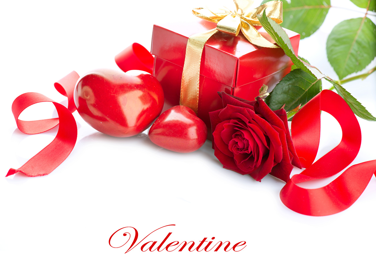 Фото День святого Валентина Английский Сердце Розы Красный Цветы подарков ленточка белым фоном День всех влюблённых инглийские английская серце сердца сердечко роза красных красная красные цветок Подарки подарок Лента Белый фон белом фоне