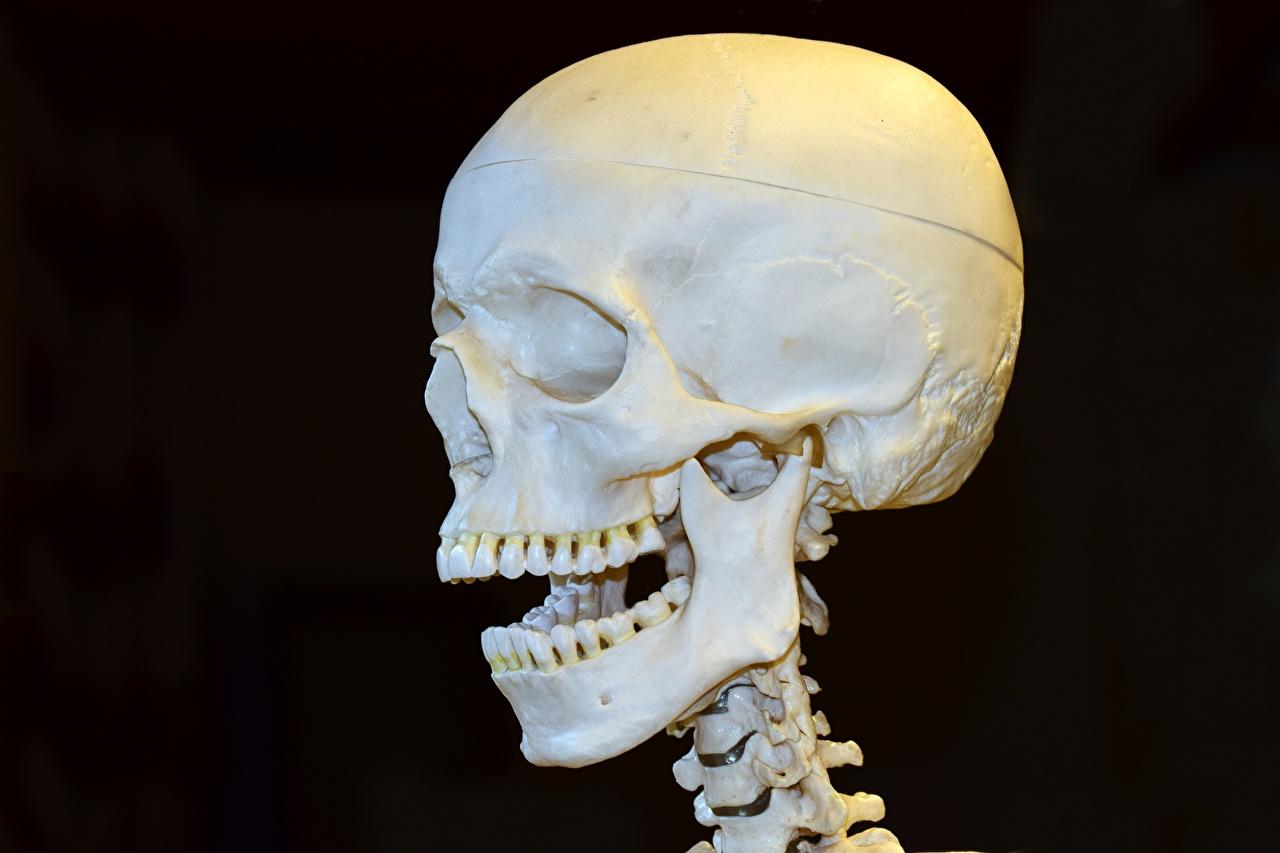 Фото Черепа Зубы Голова на черном фоне Крупным планом вблизи головы Черный фон