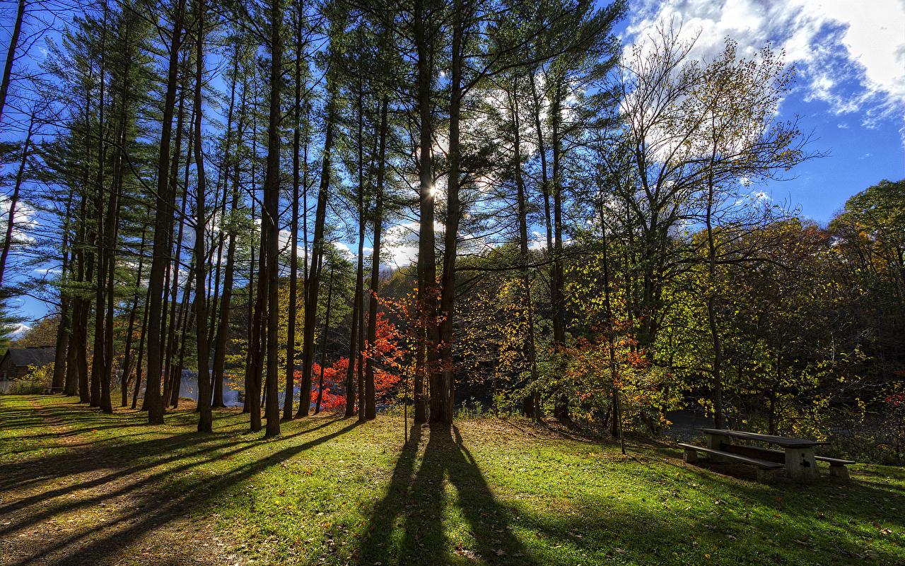 Фотография штаты Letchworth State Park Природа парк Скамейка деревьев США америка Парки Скамья дерево дерева Деревья
