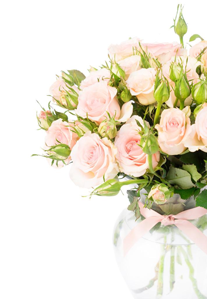 Обои Букеты Розы Цветы Бутон Белый фон