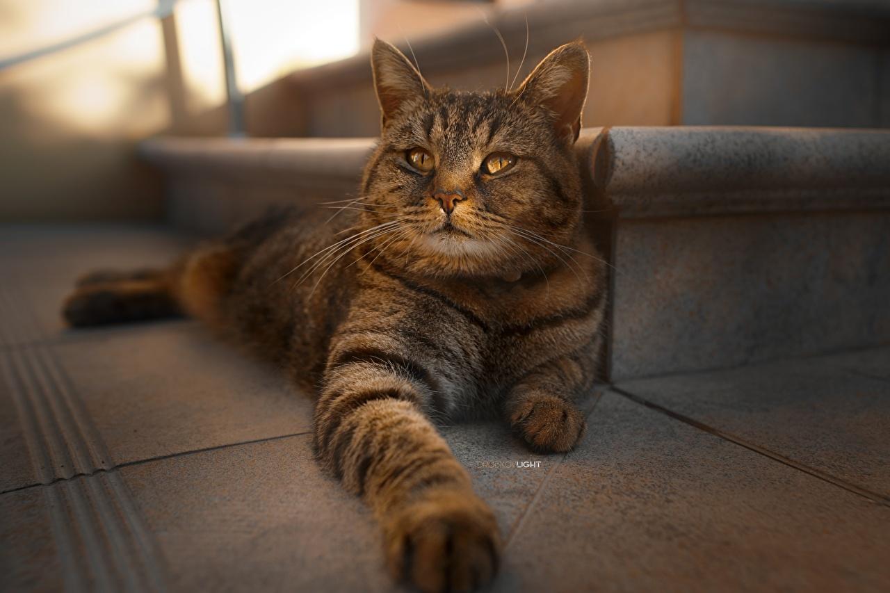 Обои для рабочего стола Кошки боке лап животное кот коты кошка Размытый фон Лапы Животные