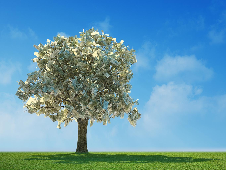 Обои для рабочего стола Банкноты Деньги Много дерево Купюры дерева Деревья деревьев