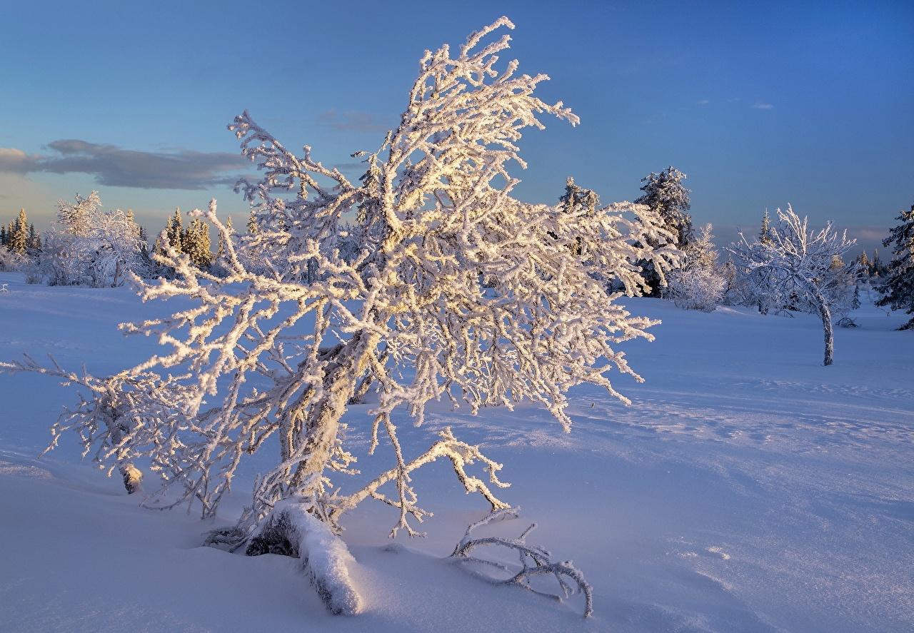 Фотография Зима Природа Снег Деревья сезон года зимние снега снегу снеге дерево дерева деревьев Времена года