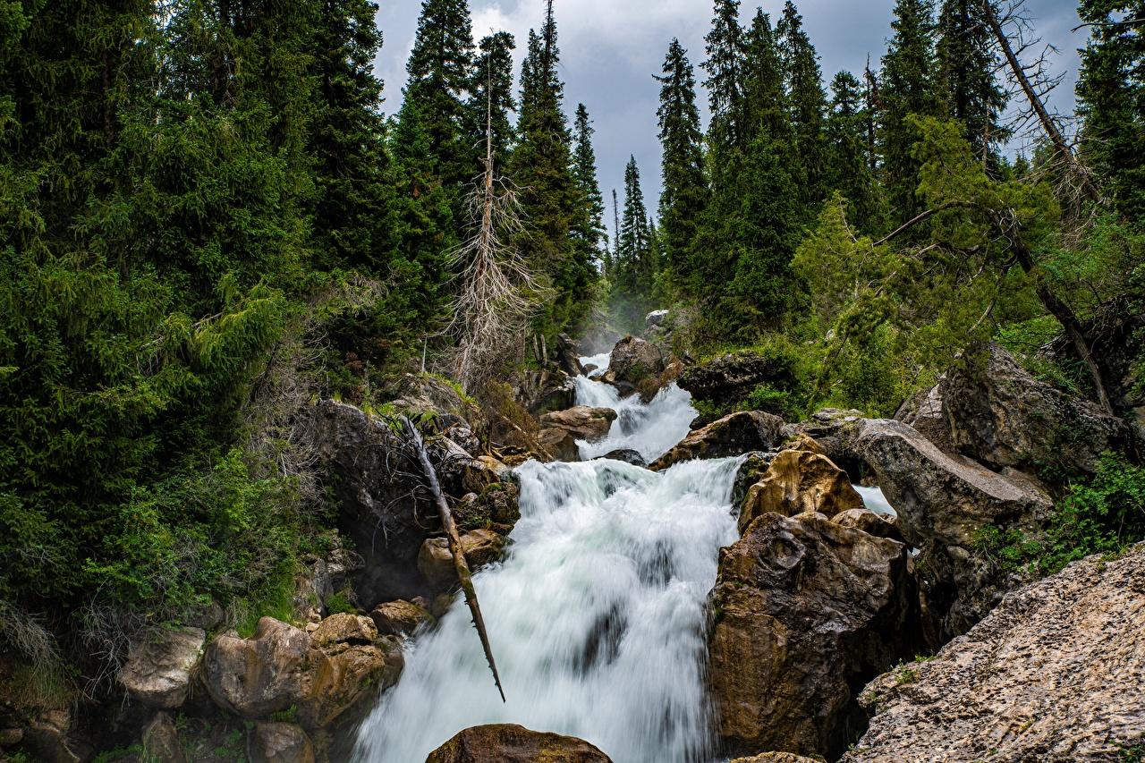 Картинки Kara-Kamysh, Kyrgyzstan скалы Природа Водопады речка деревьев Утес скале Скала Реки река дерево дерева Деревья