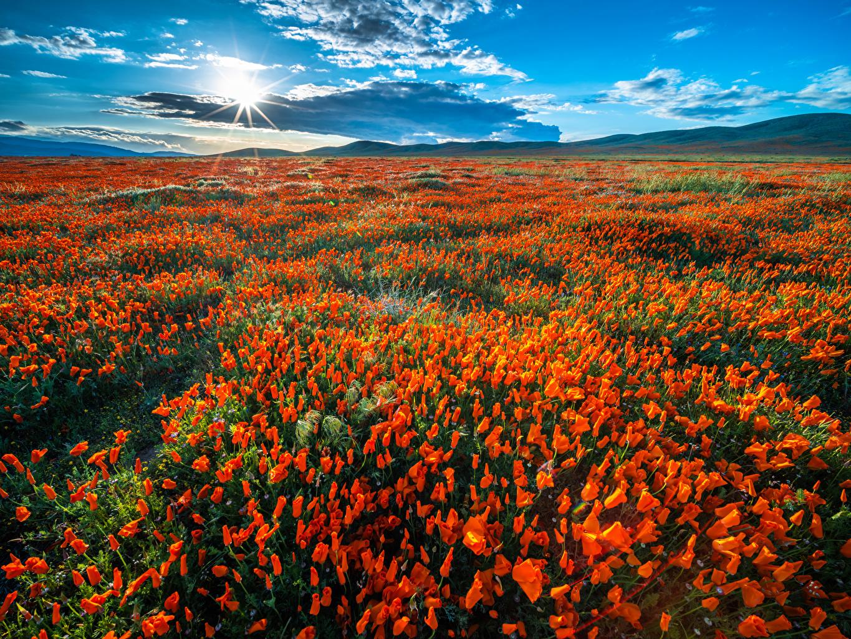 Фотография Калифорния США Солнце Природа мак Поля цветок Облака калифорнии штаты америка солнца Маки Цветы облако облачно