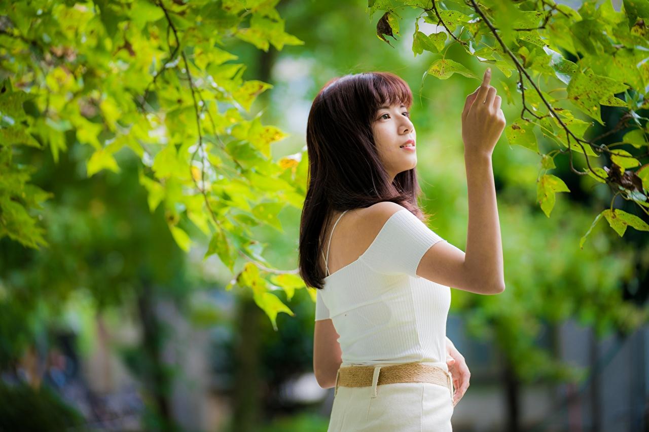 Фото Листья Шатенка Размытый фон молодые женщины азиатки на ветке лист Листва шатенки боке девушка Девушки молодая женщина Азиаты Ветки ветка ветвь