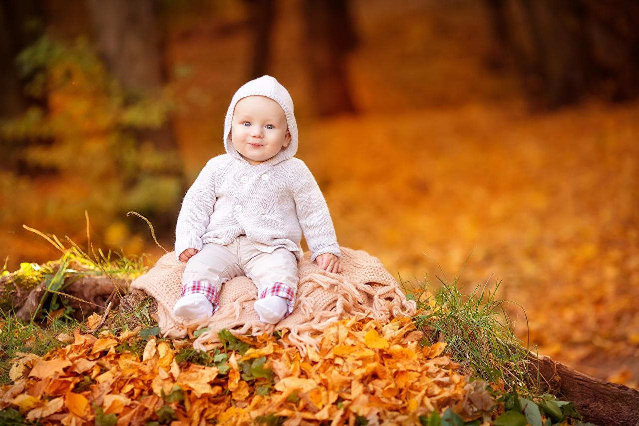 Картинки младенец Улыбка Дети Осень смотрит младенца Младенцы грудной ребёнок улыбается ребёнок осенние Взгляд смотрят