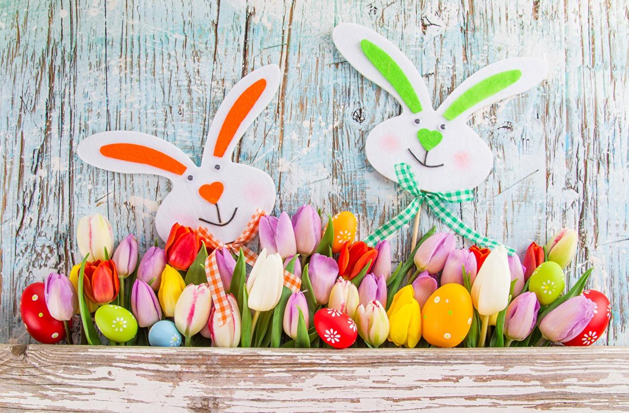 Фотографии Пасха Кролики тюльпан Цветы кролик Тюльпаны цветок