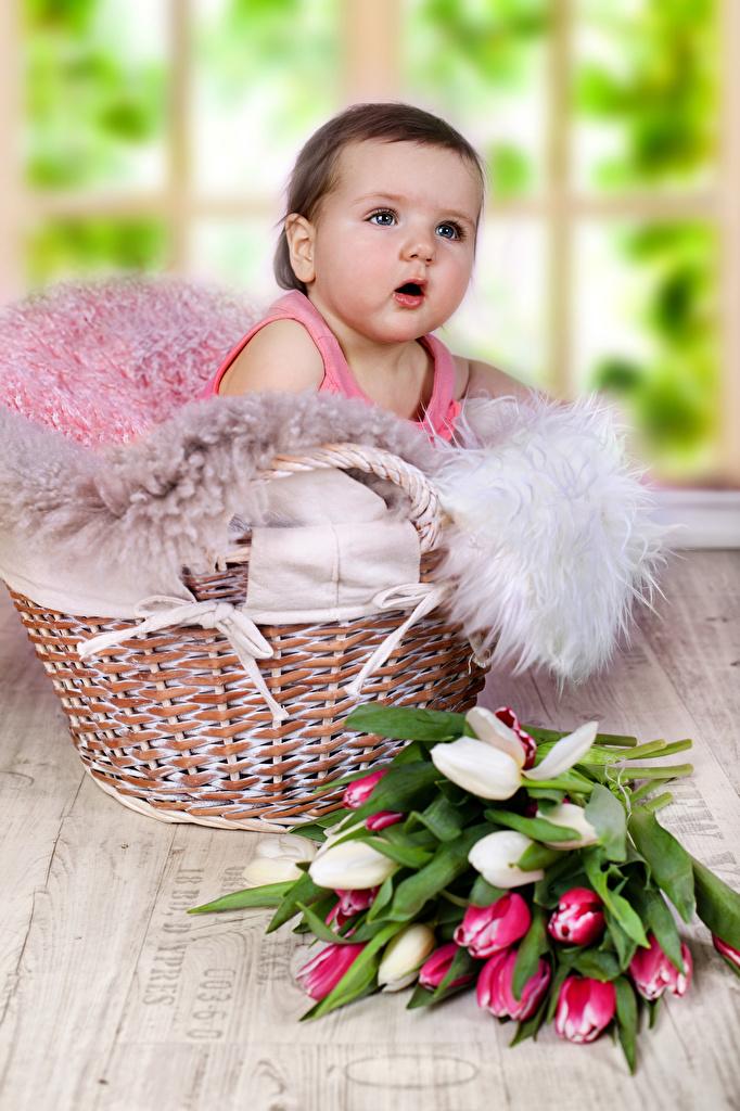 Картинка Младенцы Дети Тюльпаны Корзинка смотрит грудной ребёнок Ребёнок Корзина Взгляд