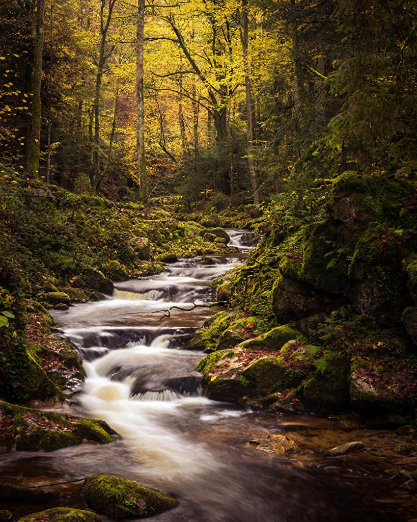 Фото Бавария Германия Black Forest Осень Ручей Природа Леса мха Камень  для мобильного телефона ручеек осенние лес Мох мхом Камни