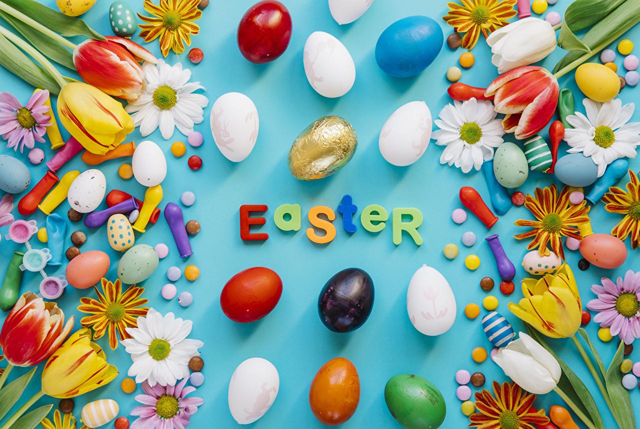 Картинки Пасха инглийские Яйца тюльпан Конфеты цветок Хризантемы Шарики Праздники Цветной фон английская Английский яиц яйцо яйцами Тюльпаны Цветы Шар