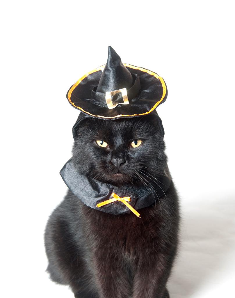Обои шляпка, Кошка, кот. Кошки foto 17