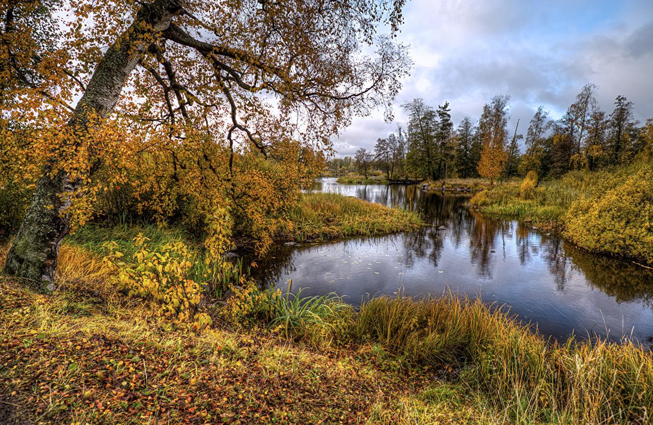 Фото Россия Листва Vuoksa River Priozersk HDRI осенние Природа Реки Деревья лист Листья HDR Осень река речка дерево дерева деревьев