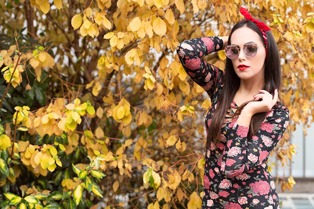 Картинка Листья Шатенка Valentina Поза девушка бант Руки Ветки очках платья лист Листва шатенки позирует Девушки молодые женщины молодая женщина Очки рука ветка очков ветвь Бантик бантики на ветке Платье