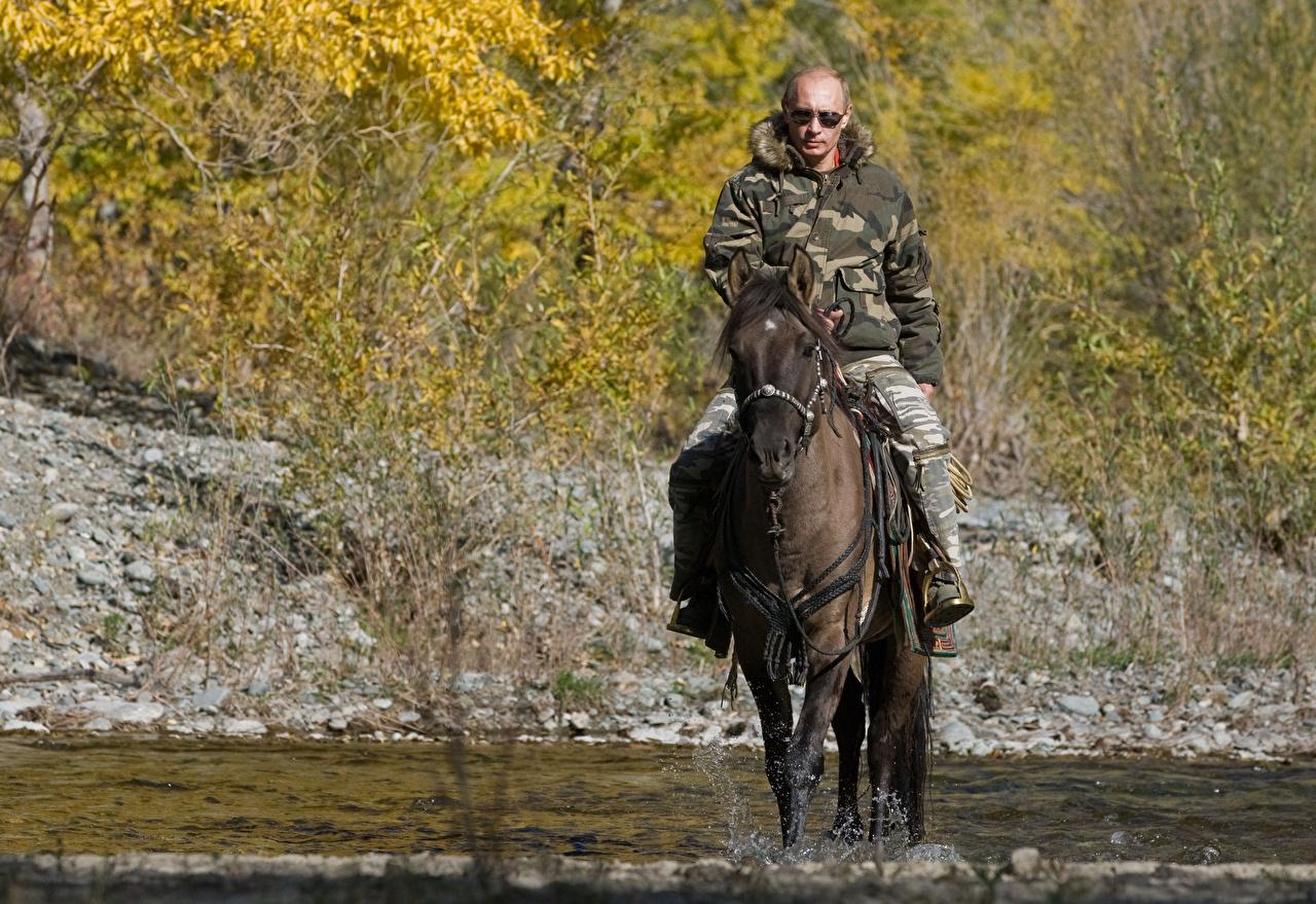 Фотографии Владимир Путин лошадь Мужчины Знаменитости Лошади мужчина