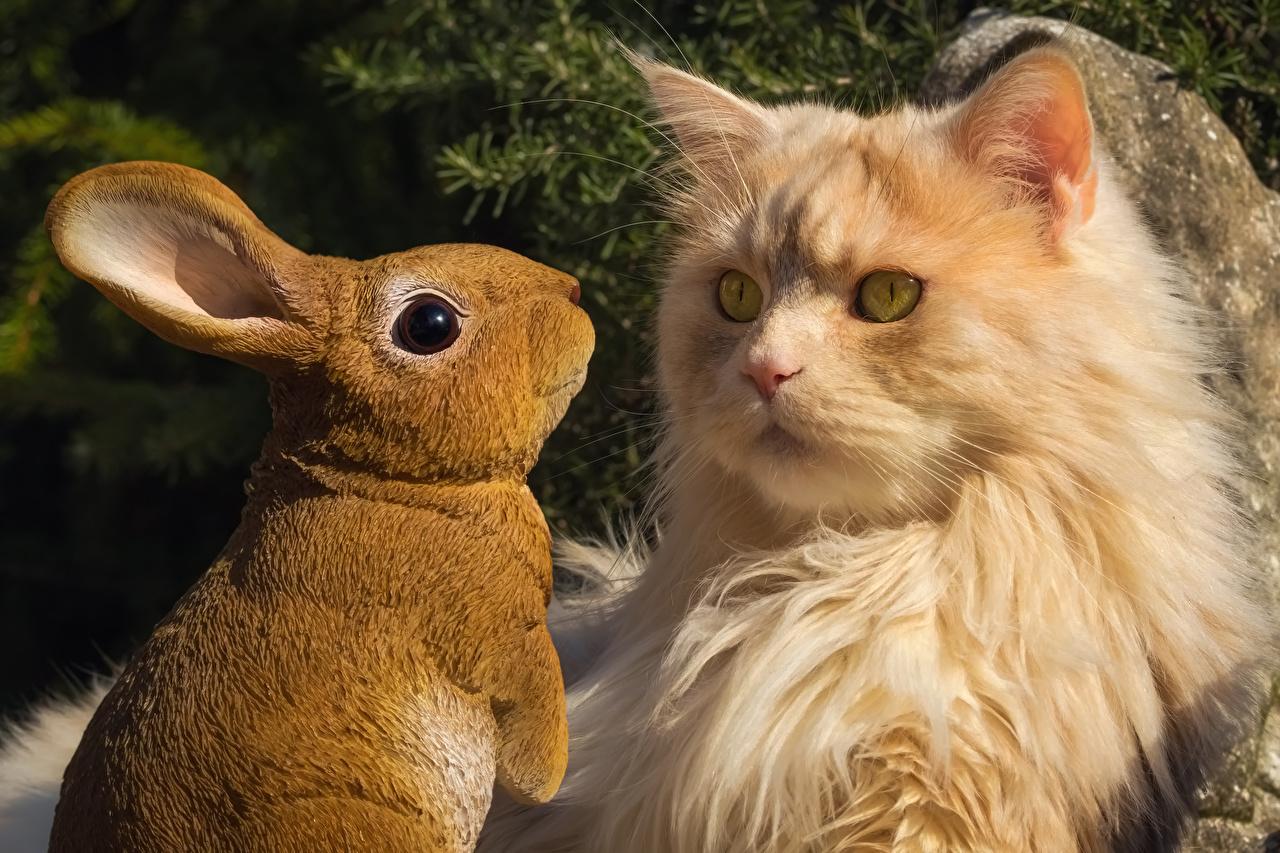 Фотография коты Кролики смотрит Животные кот Кошки кошка кролик Взгляд смотрят животное