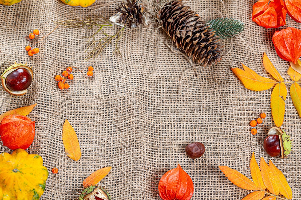 Фото Каштан лист Physalis Тыква осенние Природа Ягоды шишка Листва Листья Осень Шишки