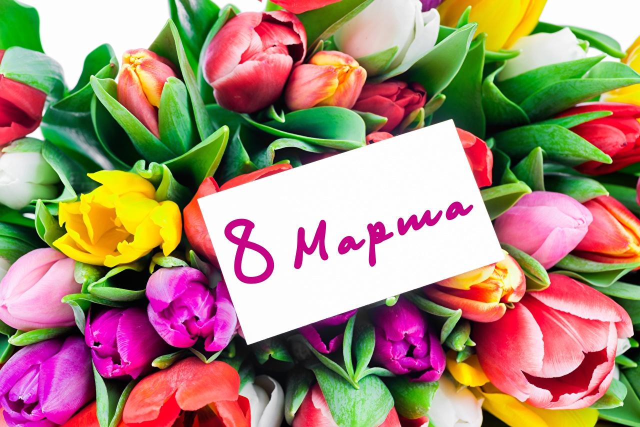 Фотографии 8 марта Русские Тюльпаны Цветы