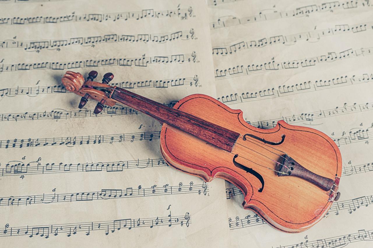 Фотографии скрипка Ноты Музыкальные инструменты Скрипки
