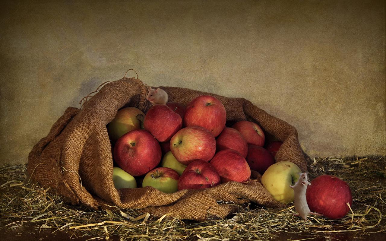 Фотографии Яблоки Еда Солома Пища Продукты питания